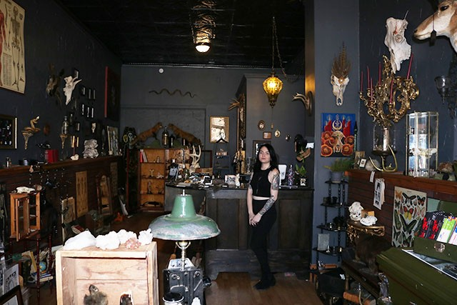 Cassandra Pace's curiosity shop has a particular interest in taxidermy. - MEGAN ANTHONY