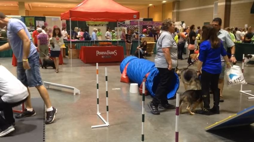 The St. Louis Pet Expo circa 2014. - VIA YOUTUBE