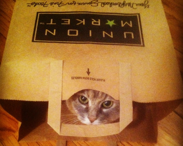 Lucy looks out from one of her paper bag apartments. - COURTESY JENNA MURPHY