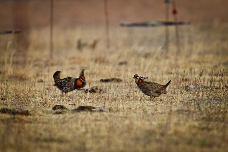 State Conservationists Scour The Kansas Boondocks Aiming To