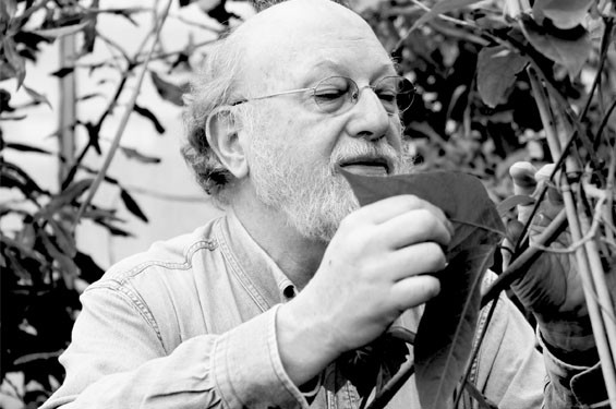 Professor Dennis McKenna believes in the medicinal properties of the Banisteriopsis vine.