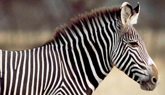 The Saint Louis Zoo: It's free!