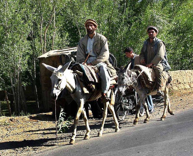 Donkeys_in_Afghanistan.jpg
