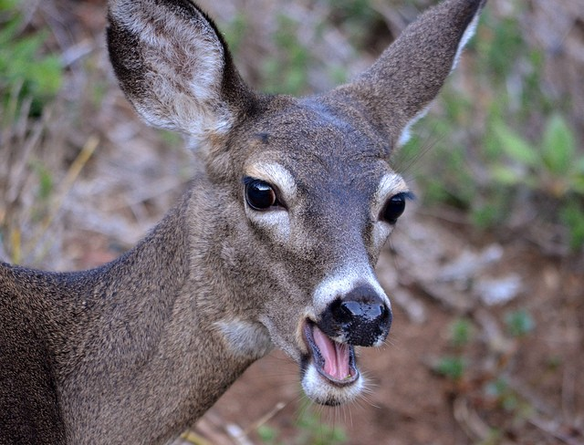 """Oh, deer!"" - SONSTOEM VIA FLICKR"