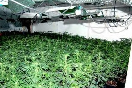 The group allegedly grew hundreds of pot plants inside St. Louis homes.