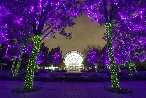 The Garden Glow at the Missouri Botanical Garden. - CREDIT MARY LOU OLSON