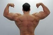 musclebound.jpg