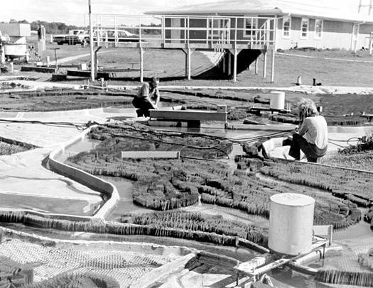 The Mississippi River model during its last days of use in the early 1970s. - U.S. ARMY CORPS OF ENGINEERS VIA PLACES