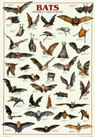 Bats. Get it?