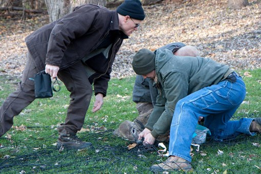 After the nets are dropped, White Buffalo and Conservation Department employees rush to subdue the trapped deer with chemical tranquilizers. - PHOTO: MISSOURI DEPARTMENT OF CONSERVATION.