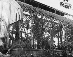 The Palm House comes down to make way for the Climatron.