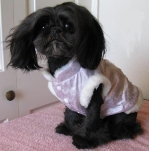 When pampering your pet goes too far. This dog looks like he would rather be in a puppy mill than wear this outfit. - IMAGE VIA