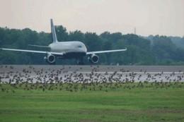 Watch out birdies! - IMAGE VIA
