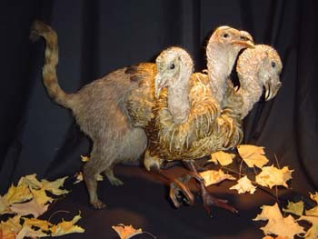 Chimera by Sarina Brewer, from the group's first show in 2004 - MINNESOTA ASSOCIATION OF ROGUE TAXIDERMISTS