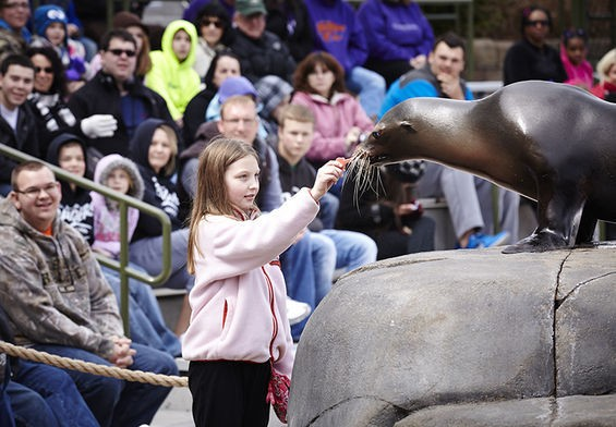 No fair, we want to feed the sea lions! - STEVE TRUESDELL