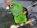 parrot_thumb_120x90.jpg