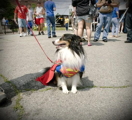 superman_1327.jpg