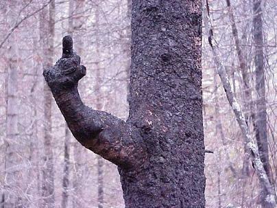 tree_bird.jpg