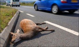 Driver dies trying to avoid dead deer in Imperial - IMAGE VIA