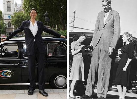"Sultan Kosen stands 8'1"" compared to Robert Wadlow's 8'11""."