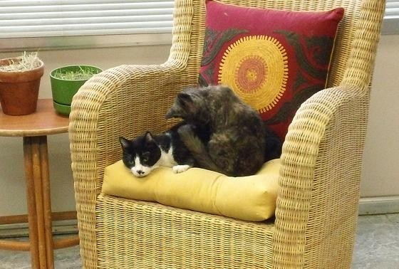 Spot and Miriam are special needs cats with medical issues. The two are constant companions, helping each other through their conditions.