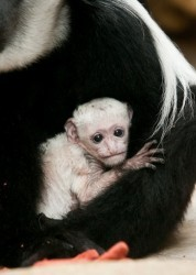 Baby Mosi - ETHAN RIEPL, ST. LOUIS ZOO
