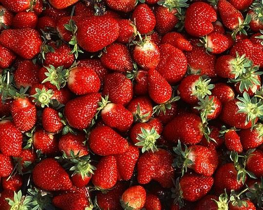 479px_Chandler_strawberries.jpg