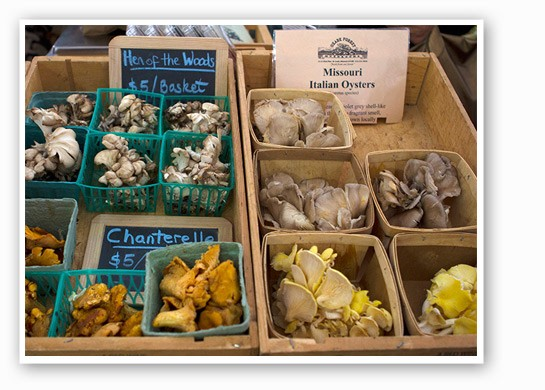 Ozark Forest mushrooms at the Best of Missouri Market. | Zoe Kline