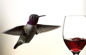 hummingbird_wine.jpg