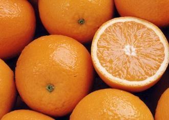 www.citrussafari.com