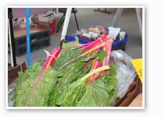Blue Heron Orchard's Swiss chard displays its vibrant colors. | Cheryl Baehr