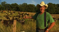 Salatin and his grass-fed cows. - FOODINCMOVIE.COM