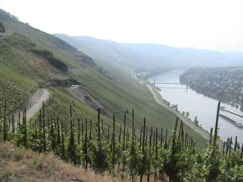 "The vineyard from which this week's wine comes. - USER ""RIVERWOOD,"" WIKIMEDIA COMMONS"