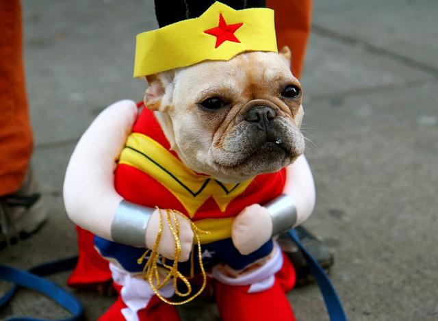 Let's face it: Man's best friend makes an adorable Wonder Woman. - PHOTO COURTESY OF FLICKR/JENNIFER CASSON