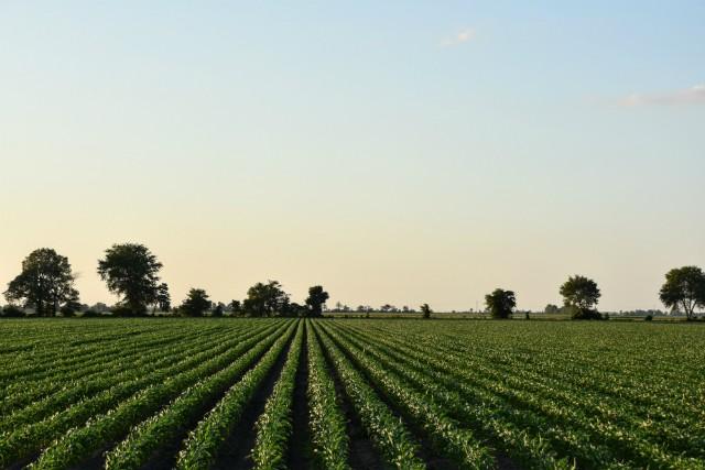Randy Constant ran a massive organic grain scheme before he was caught. - DOYLE MURPHY