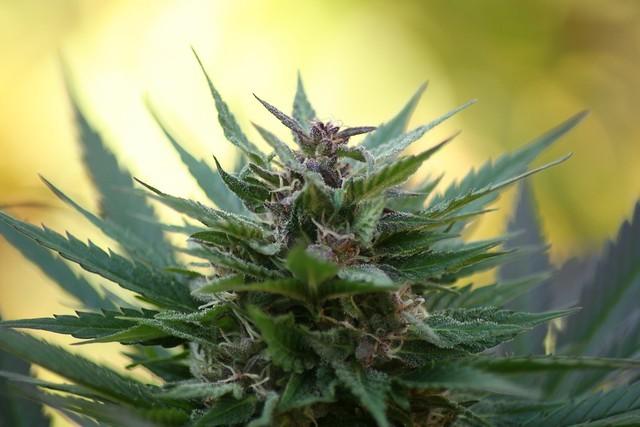 Buy weed online Kalgoorlie–Boulder