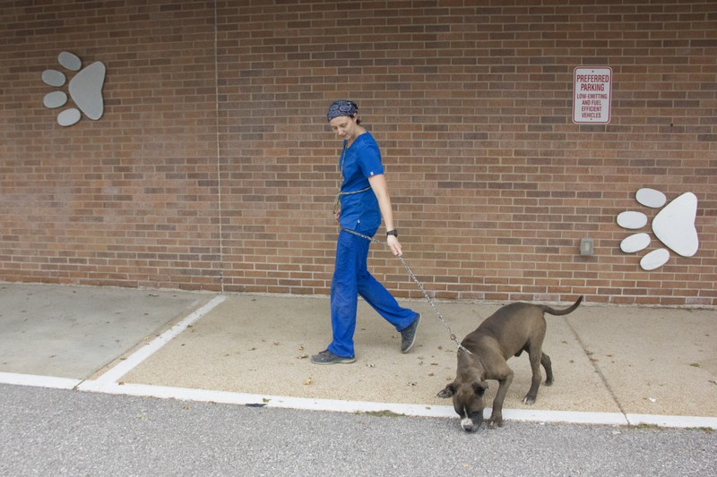 A staff member walks a dog outside the county shelter in September. - DANNY WICENTOWSKI