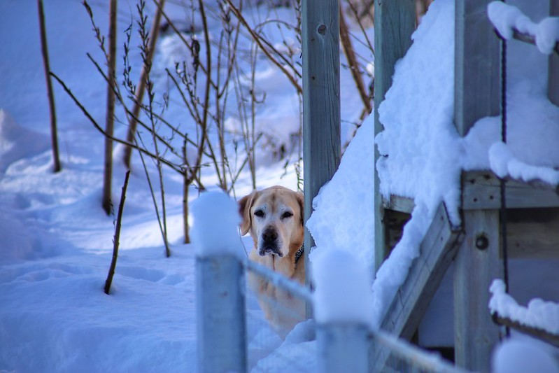Doggie, it's cold outside - JAY / FLICKR