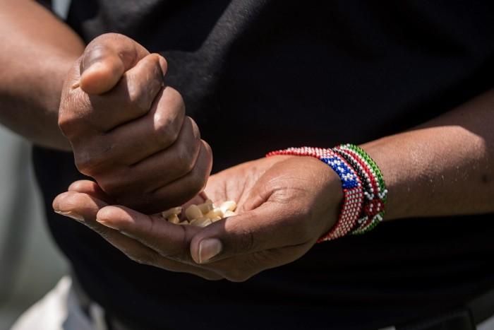 Soyiantet sifts corn seeds in his hands. - TRENTON ALMGREN-DAVIS