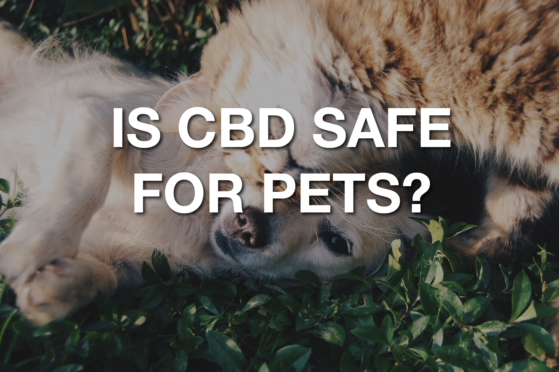 Is Cbd Safe For Your Pets Sponsored Content News Blog