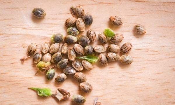 seeds01.jpg