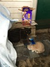 Two of the cats rescued from the Ancona house.