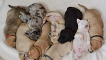 Send Your Sweetie a Puppy Gram on Valentine's Day for a Good Cause