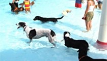 Pool Pups