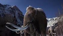 Mammoth Mammals