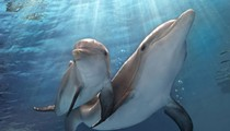 No Fluke: <i>Dolphin Tale 2</i> is a warm, wise animal tale