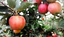EverCrisp Apples Are Now in St. Louis (But You've Got to Pick Them Yourself)