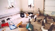 Purina Wants Your Help Proving Multiple Cat Owners Aren't Filthy Animal Hoarders