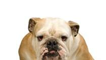 Bulldog Roofing is Full of Bull, Says BBB