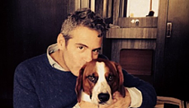 St. Louis Native/Bravo Exec Andy Cohen's Twitter Chat Goes to the Dogs